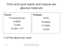Cellular Respiration Glycolysis Tca And Etc