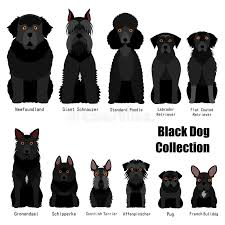 Husky Stock Chart Collection Of Black Dog Stock Vector Illustration Of
