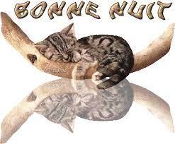 Bonne nuit avec que des chats !