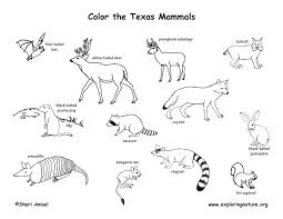 Texas Mammals Coloring Page