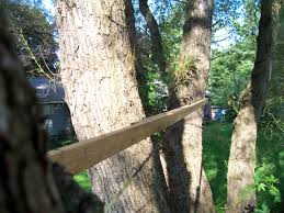 Hanging Tree House So You Want To Install A Garnier Limb