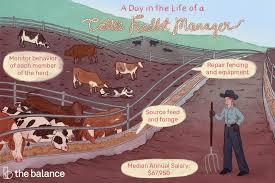 Dress Barn Salary Cattle Feedlot Manager Job Description Salary Skills More
