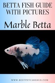 Betta Fish Chart Betta Fish Complete Siamese Fighting Fish List With