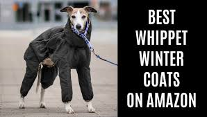 Best Whippet Coats For Winter On Amazon Spoiled Hounds
