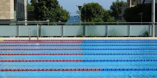 Olympic size swimming pool Sport Area Training Training camp