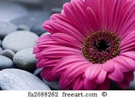 gerbera daisy art print gerbera daisy on gerbera daisy canvas wall art with free gerbera daisy art prints and wall art freeart