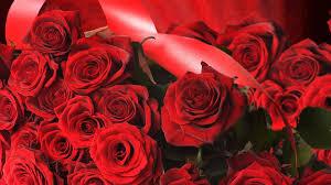 flowers red rose wallpapers fresh rose flower wallpaper hd wallpapercraft of flowers red rose wallpapers