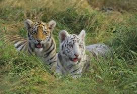 Resultado de imagen de fotos de animales salvajes