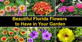 top 22 florida flowers with pictures