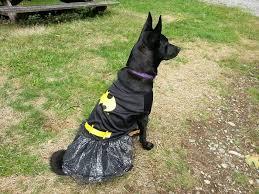 office pet ideas. Bat Girl Dog. \u201c Office Pet Ideas R