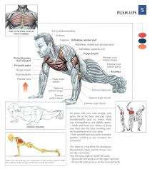 Chest Workout Tips Bench Seminar 3 Stop Stretching  Muscle How To Find Your Max Bench Press