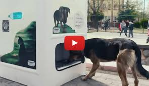 Dog Biscuit Vending Machine Stunning A Dog Food Vending Machine Passersby Can Put In Used Water Bottles