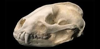 Small Animal Skull Identification Chart Identify Nature Natural History Museum