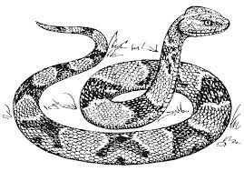 Small Picture Free Printable Snake Coloring Pages For Kids