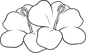Small Picture Hawaiian Flower Coloring Pages Coloring Pages