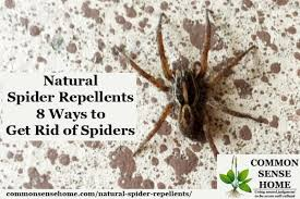 how to kill spiders in house. Spider On Wall With Text Overlay \ How To Kill Spiders In House T