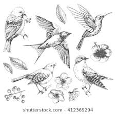 pictures of birds for drawing. Wonderful Birds Set Of Birds And Flowers Line Drawings Ink Drawing Hand Drawn  Illustration To Pictures Of Birds For Drawing A