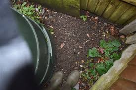 rats etc in compost