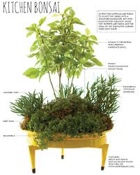 Kitchen Herbs Garden Make A Countertop Kitchen Bonsai Herb Garden Cultivate Your