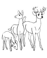 Small Picture 201 best Deer Adult Coloring Pages images on Pinterest Coloring