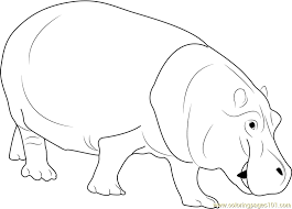 Small Picture Hippopotamus Coloring Page Free Hippopotamus Coloring Pages