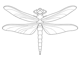 Dragonfly Coloring Page Free Printable Coloring Pages