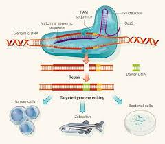 Genome Editing Looking Beyond The Debate Of Who Owns Crispr Gene Editing