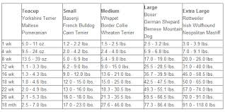 Comprehensive Malamute Weight Chart Shih Tzu Size And Weight