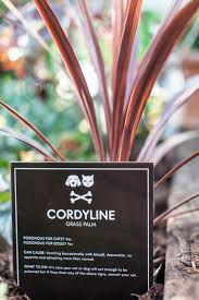 cordyline at poisonous pawtanical garden