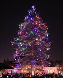 Garrison Street Lights Point Loma San Diego Holiday Traditions Best Western Island Palms