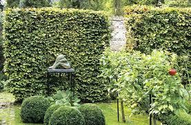 20187 us beech modern garden hedge sculpture contemporary