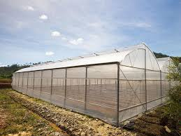 uv resistant greenhouse plastic sheeting. Wonderful Resistant Greenhouse Plastic Film Clear Polyethylene 6 Mil 4 Year UV Resistant  Cover 15 Ft Wide Inside Uv Sheeting I
