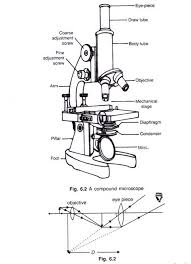 Types Of Microscopes Chart 5 Important Types Of Microscopes Used In Biology With Diagram
