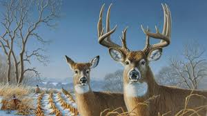 whitetail deer wallpaper 2048x1536