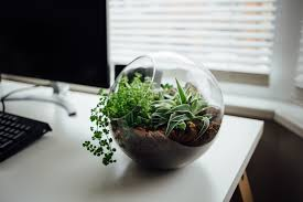 desk garden. Modren Garden Grow Some Mint Basil Or Longevity Spinach And Nibble On A Snippet Each Day  For An Amazin Burst Of Flavor Nutrition These Kinds Natural Foods  On Desk Garden