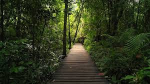 jungle background. Plain Jungle Adventure Background Of Walk Path Leading To Green Tropical Jungle  Rainforest Stock Video Footage  Videoblocks For Jungle Background R