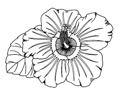 Small Picture fresh hibiscus coloring page 94 for your line drawings with
