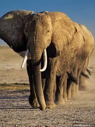 Elephants HD Photos & Wallpapers (1080p ...