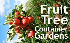 how to grow fruit trees in your indoor container garden