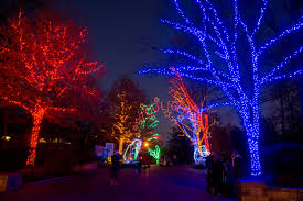 Zoo Lights Hours Washington Dc A Month Of Holiday Fun At The Zoo