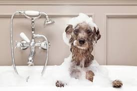time for a dog bath hmm if you re like us and dog baths are usually an outdoor activity it s time for plan b even here in central texas most days are
