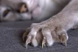 how to safely trim a cat s claws