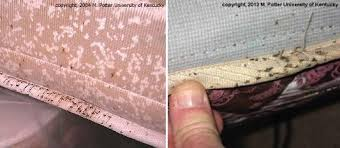 how long do lice live on furniture Dark spots on mattress and box