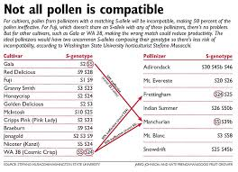 Washington State Seasonal Fruit Chart Pollinizer Research Reveals Patterns Good Fruit Grower