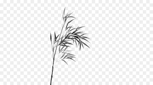 bamboo watercolor painting line art plant png