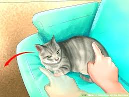 keep cats off furniture keep pets off furniture inspirational how to keep cats off outdoor furniture