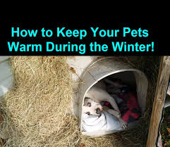 how to keep a dog warm during winter cold weather warm dog house you