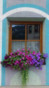 Build Window Box Best 25 Wooden Window Boxes Ideas Only On Pinterest Wooden