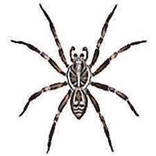 Australian House Spiders Chart Spider Identification Australian Reptile Park