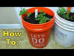 updated easiest how to make self watering sip planter with 5 gallon bucket milk jug part one